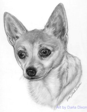 chihuahua_dog_pencil_portrait_drawing.jpg