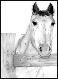 graphite pencil portrait horse fence wood drawn