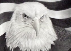 art eagle sept 11th september 11 pencil drawing